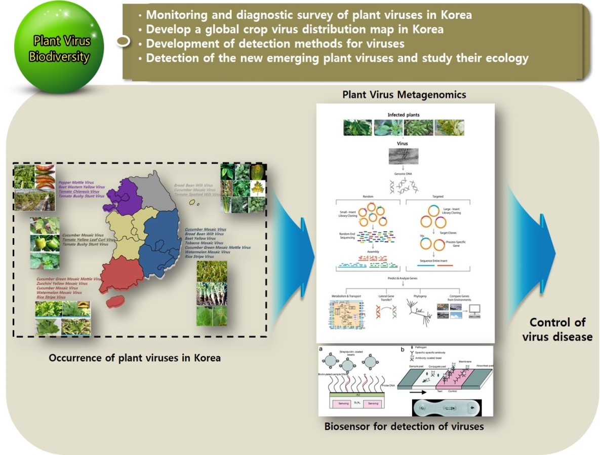 식물바이러스2
