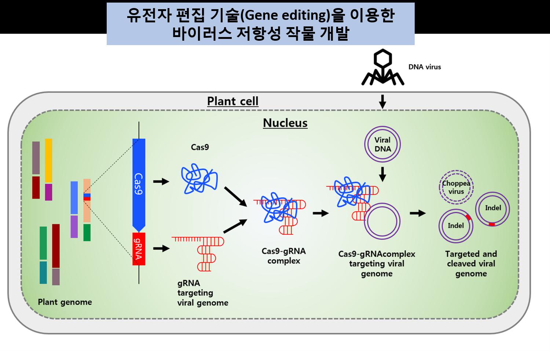 식물바이러스4